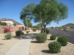 City of PeoriaAZ_Happy Valley Rd_Pedestrian_9028